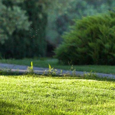 Grünfläche-Slider